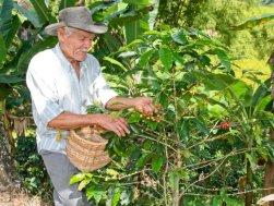 90_kolumbia_salento_plantacja_kawy
